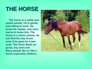 THE HORSE The horse is a noble and useful animal. He is gentle and willing to