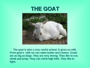 THE GOAT The goat is also a very useful animal. It gives us milk. From goat's