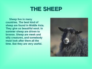 THE SHEEP Sheep live in many countries. The best kind of sheep are found in M
