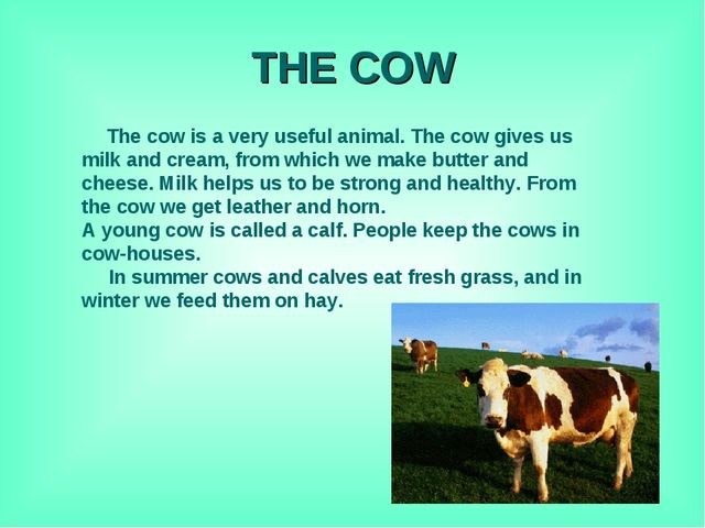 THE COW The cow is a very useful animal. The cow gives us milk and cream, fro...