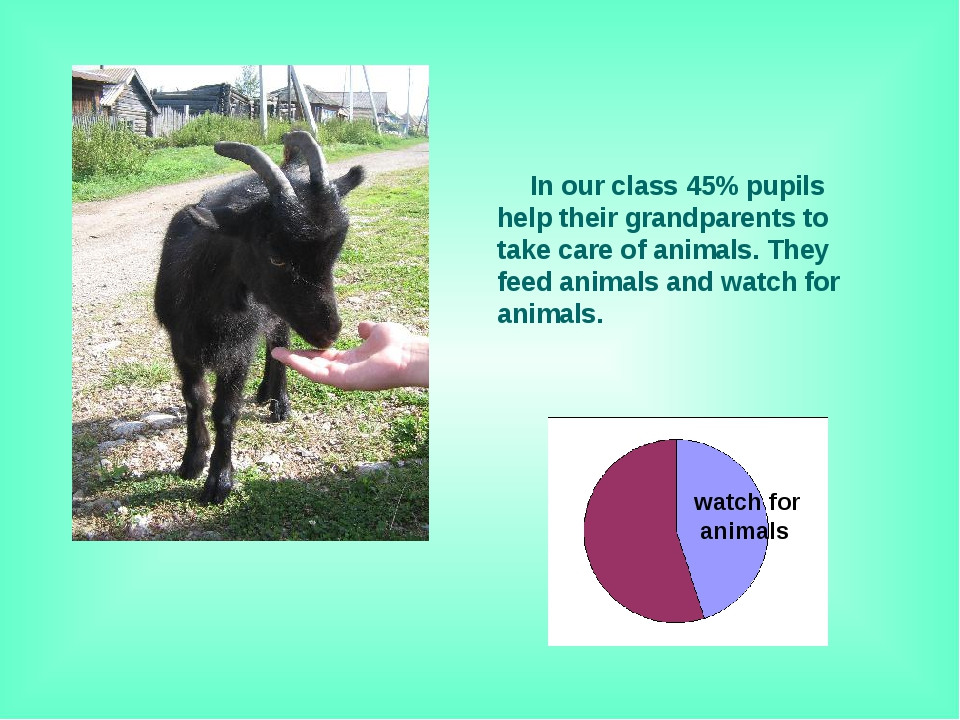 In our class 45% pupils help their grandparents to take care of animals. The...
