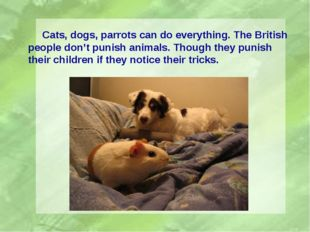Cats, dogs, parrots can do everything. The British people don't punish anima