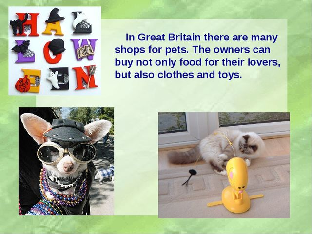 In Great Britain there are many shops for pets. The owners can buy not only...