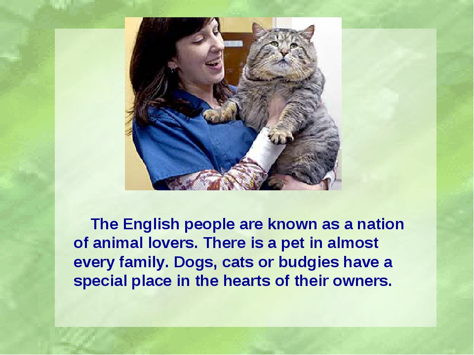 The English people are known as a nation of animal lovers. There is a pet in...