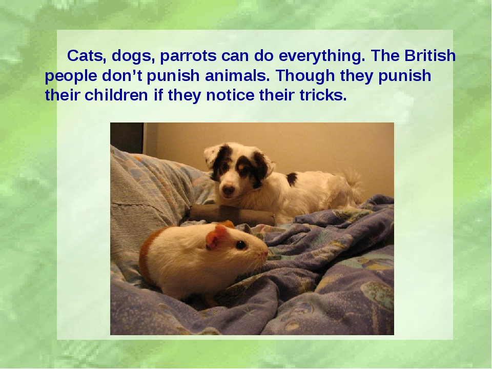 Cats, dogs, parrots can do everything. The British people don't punish anima...
