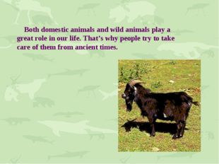 Both domestic animals and wild animals play a great role in our life. That's