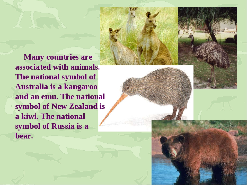 Many countries are associated with animals. The national symbol of Australia...