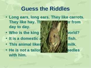 Guess the Riddles Long ears, long ears. They like carrots. They like hay. The