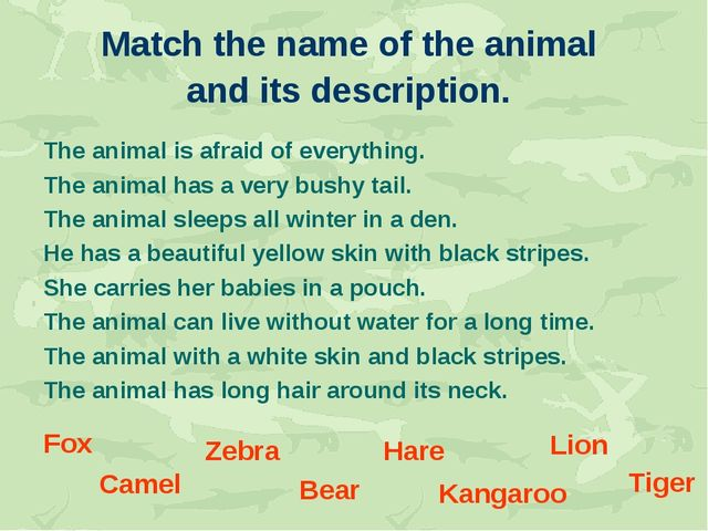 Match the name of the animal and its description. The animal is afraid of eve...