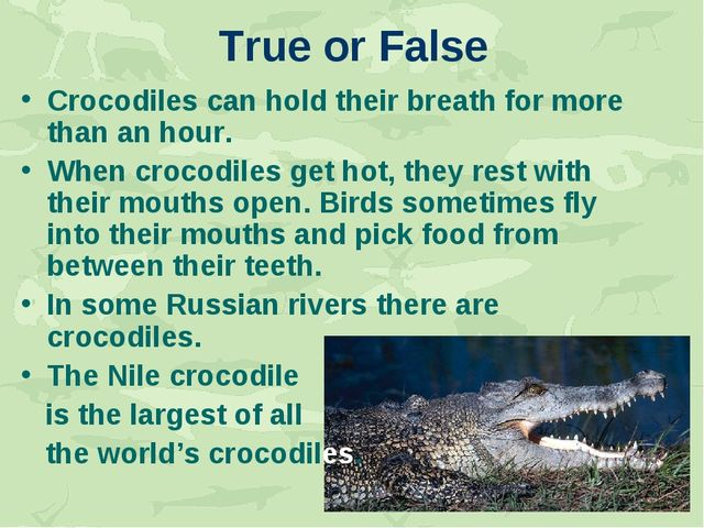 True or False Crocodiles can hold their breath for more than an hour. When cr...