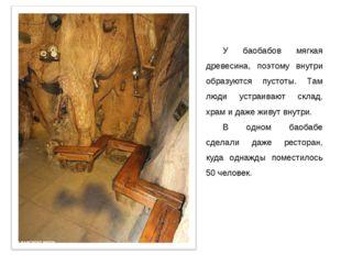 У баобабов мягкая древесина, поэтому внутри образуются пустоты. Там люди устр