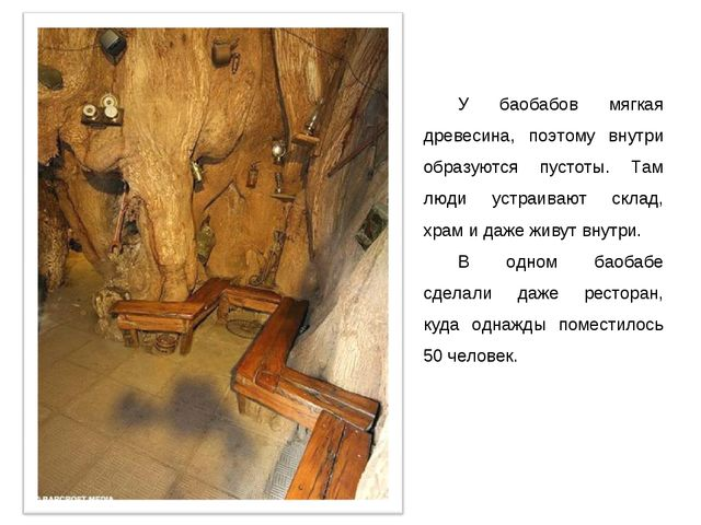 У баобабов мягкая древесина, поэтому внутри образуются пустоты. Там люди устр...