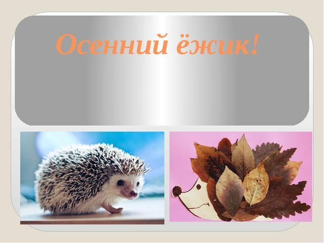 Осенний ёжик!