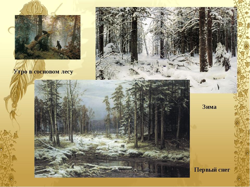 Первый снег Зима Утро в сосновом лесу