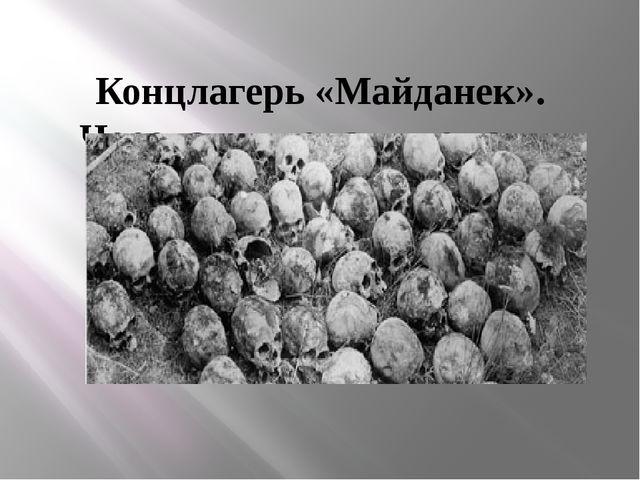 Концлагерь «Майданек». Черепа, выкопанные из ям 1945 г.