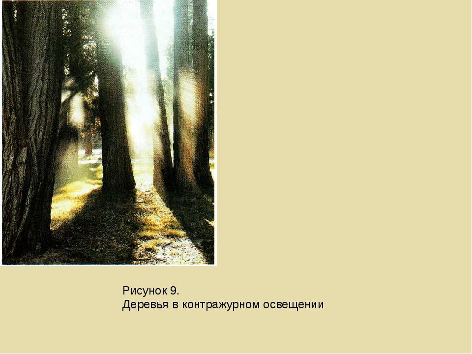 Рисунок 9. Деревья в контражурном освещении