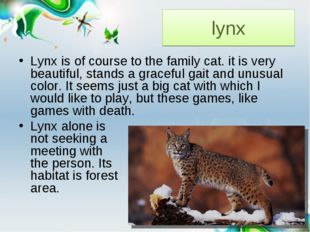 lynx Lynx is of course to the family cat. it is very beautiful, stands a grac