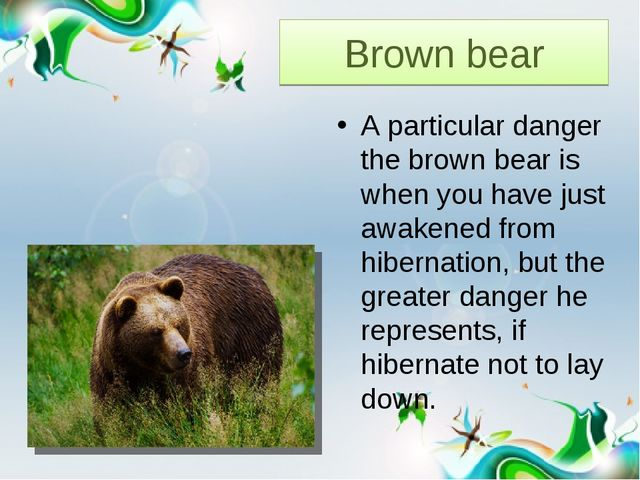 Brown bear A particular danger the brown bear is when you have just awakened...