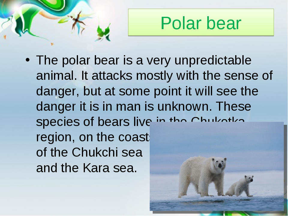 Polar bear The polar bear is a very unpredictable animal. It attacks mostly w...