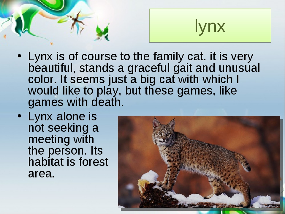 lynx Lynx is of course to the family cat. it is very beautiful, stands a grac...
