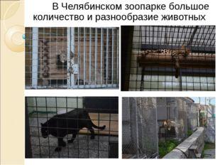 В Челябинском зоопарке большое количество и разнообразие животных