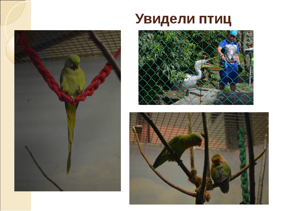 Увидели птиц