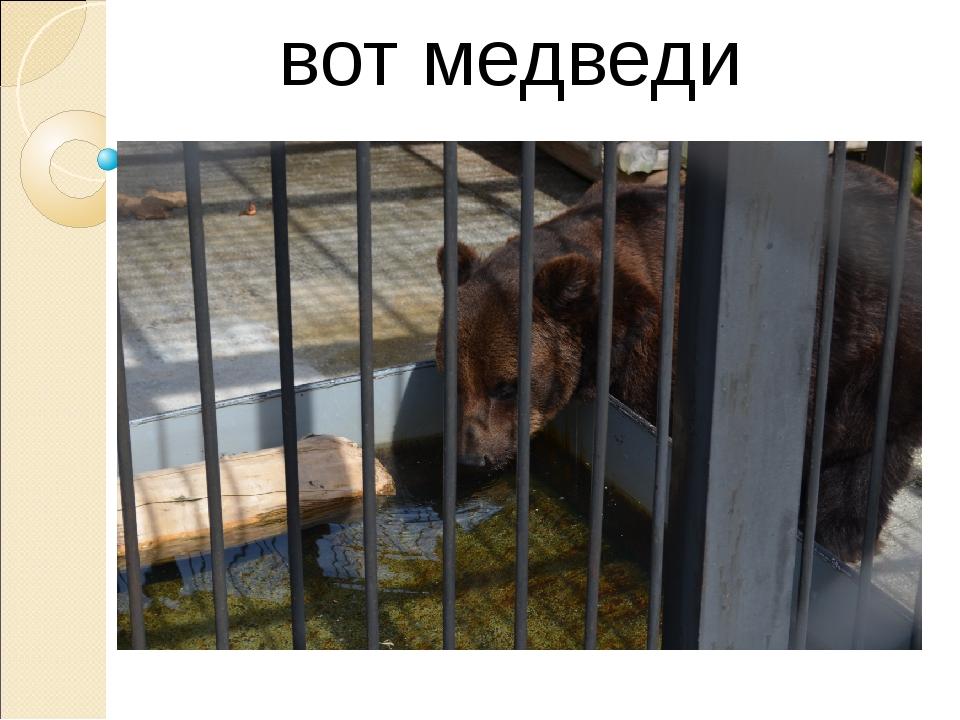 вот медведи