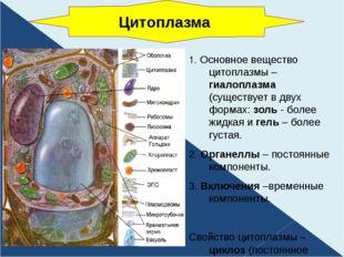 1. Основное вещество цитоплазмы – гиалоплазма (существует в двух формах: золь