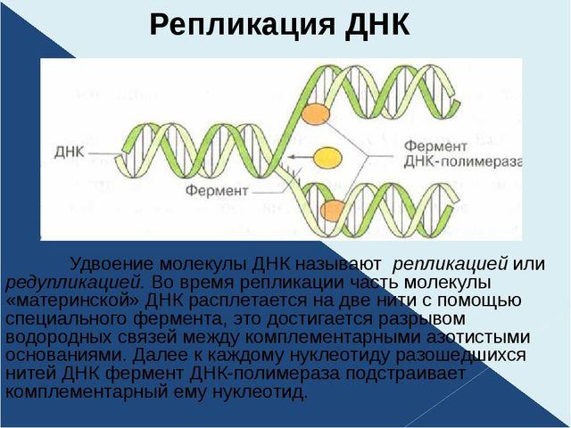 Репликация ДНК Удвоение молекулы ДНК называют репликацией или редупликацией....