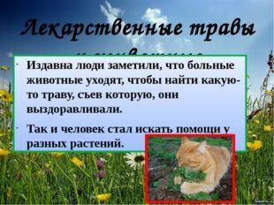 Лекарственные травы и животные Издавна люди заметили, что больные животные ух