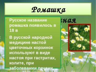 Ромашка лекарственная Русское название ромашка появилось в 18 в В русской нар