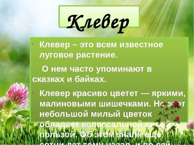 Клевер Клевер – это всем известное луговое растение. О нем часто упоминают в...
