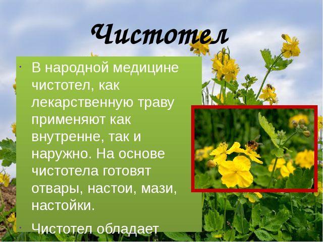 Чистотел В народной медицине чистотел, как лекарственную траву применяют как...