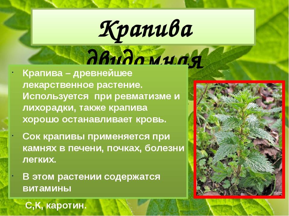Крапива двудомная Крапива – древнейшее лекарственное растение. Используется п...
