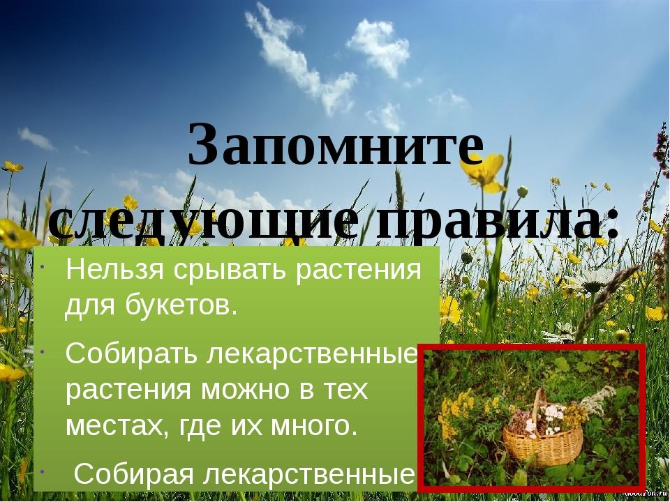 Запомните следующие правила: Нельзя срывать растения для букетов. Собирать ле...