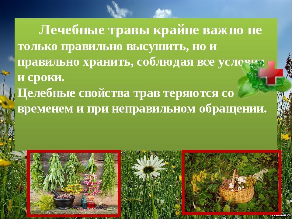 Лечебные травы крайне важно не только правильно высушить, но и правильно хра...