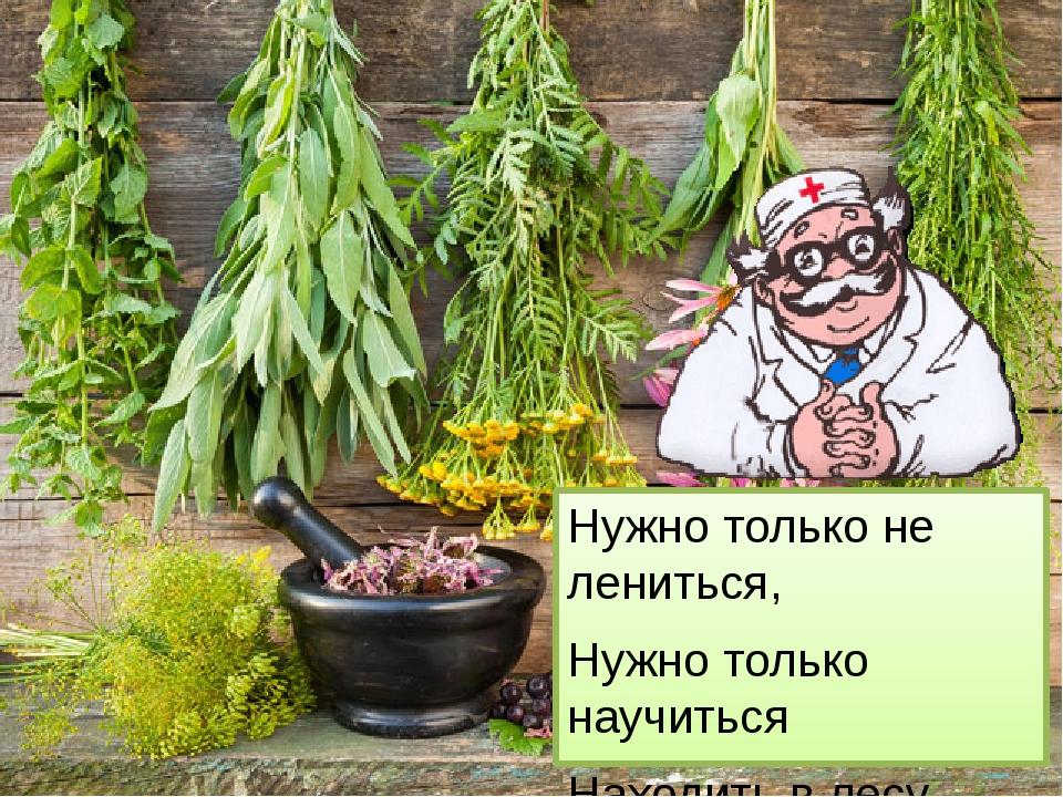 Нужно только не лениться, Нужно только научиться Находить в лесу растенья Те...