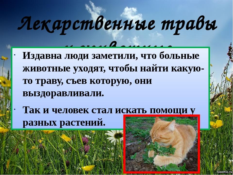 Лекарственные травы и животные Издавна люди заметили, что больные животные ух...