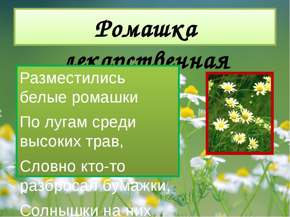 Ромашка лекарственная Разместились белые ромашки По лугам среди высоких трав,...