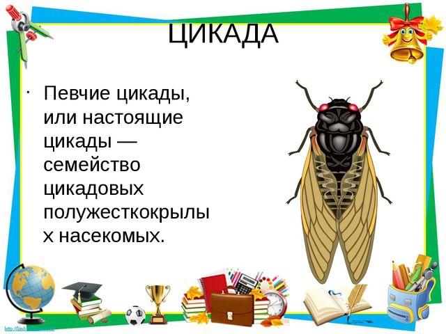 ЦИКАДА Певчие цикады, или настоящие цикады — семейство цикадовых полужесткокр...