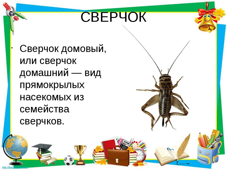 СВЕРЧОК Сверчок домовый, или сверчок домашний — вид прямокрылых насекомых из...