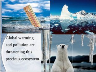 Global warming and pollution are threatening this precious ecosystem.