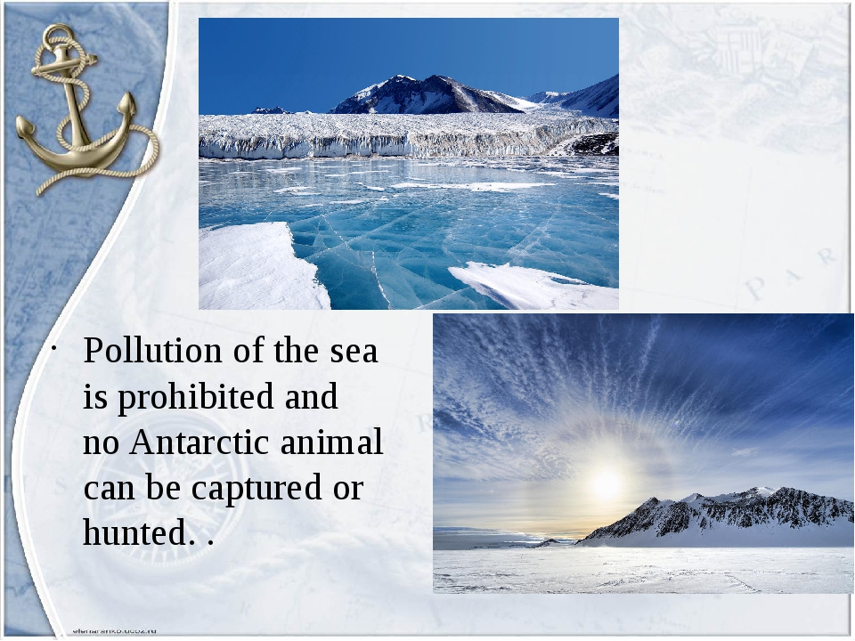 Pollution of the sea is prohibited and no Antarctic animal can be captured or...