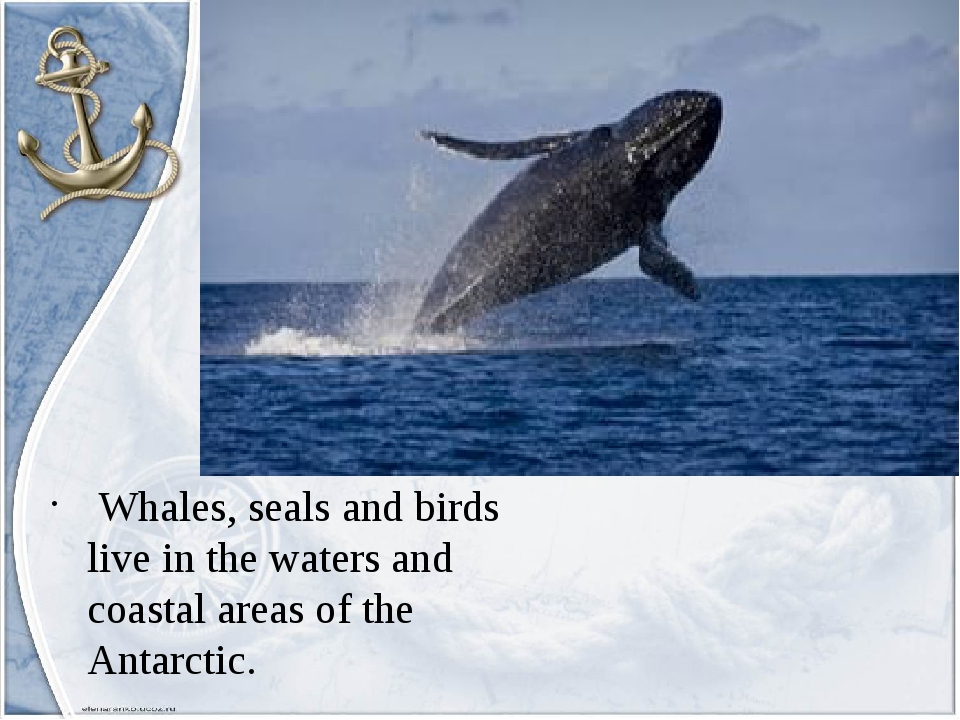 Whales, seals and birds live in the waters and coastal areas of the Antarctic.