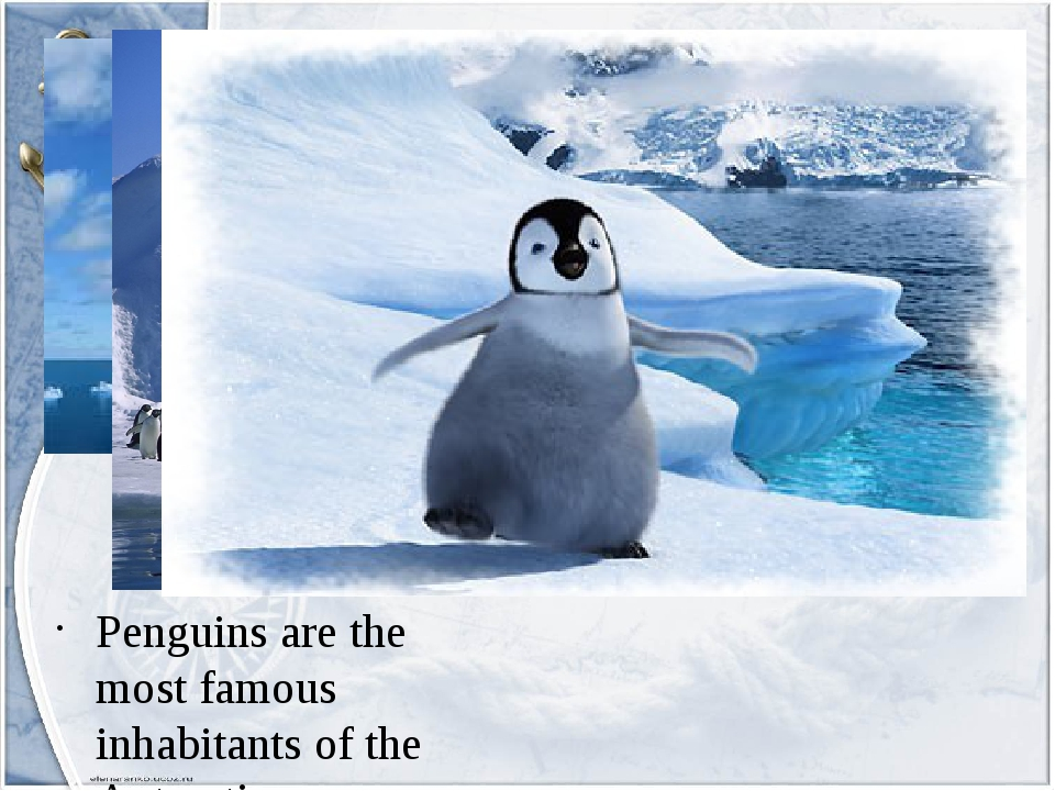 Penguins are the most famous inhabitants of the Antarctic.