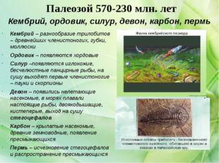Палеозой 570-230 млн. лет Кембрий – разнообразие трилобитов – древнейших член