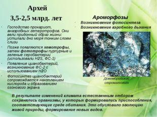 Архей 3,5-2,5 млрд. лет Господство прокариот, анаэробных гетеротрофов. Они ве