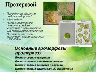 Протерозой Появляются основные отделы водорослей «Век медуз» В конце протероз