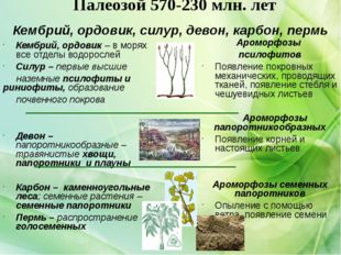 Палеозой 570-230 млн. лет Кембрий, ордовик – в морях все отделы водорослей Си