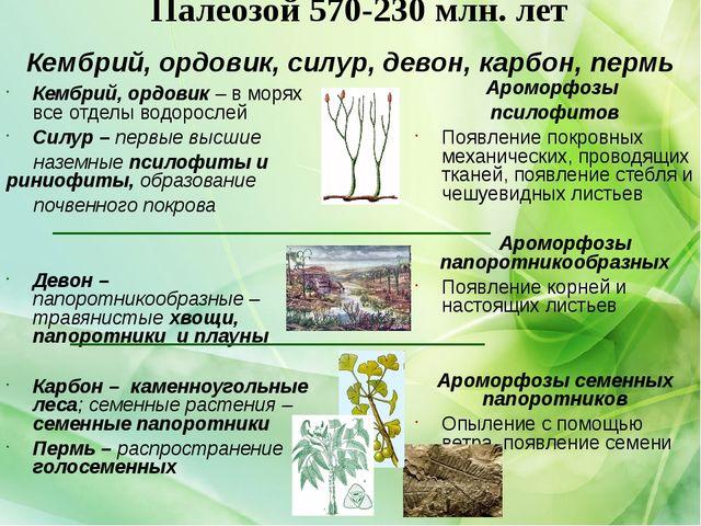 Палеозой 570-230 млн. лет Кембрий, ордовик – в морях все отделы водорослей Си...